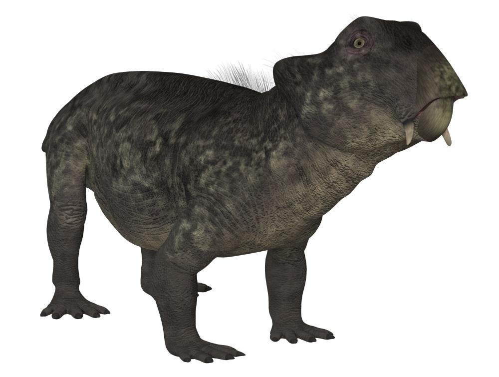 リストロサウルス Lystrosaurus Japaneseclassjp